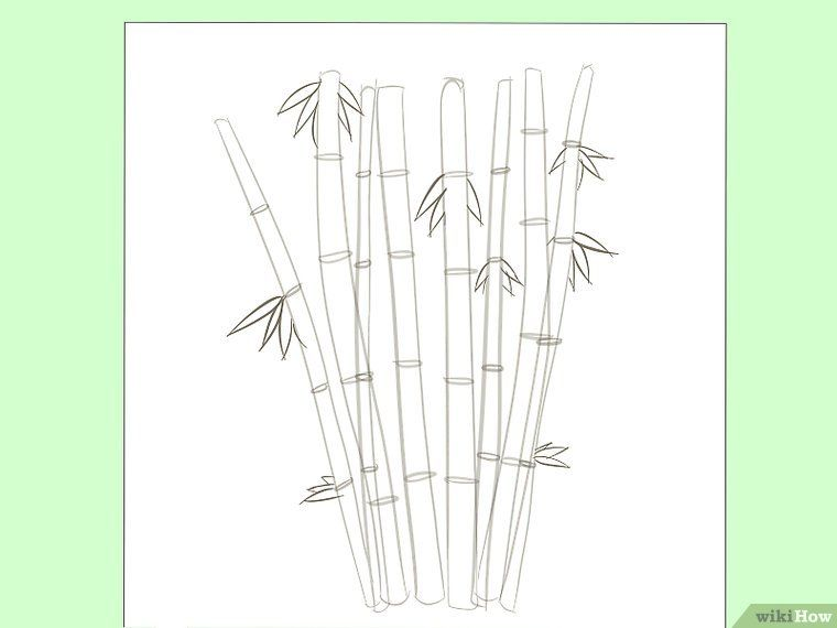 How To Draw Bamboo 8 Steps With Pictures Bamboo Drawing Drawings Bamboo Artwork