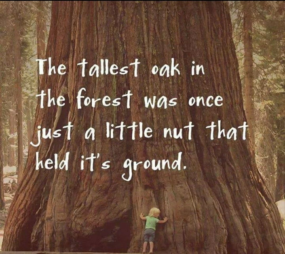The Tallest Oak In The Forest Was Once Just A Little Nut That Held Its Ground Tree Quotes Inspirational Quotes Words