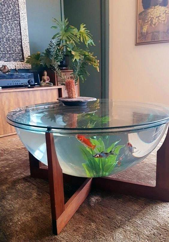 Pin By Savannah Flint On House Fish Tank Terrarium Home