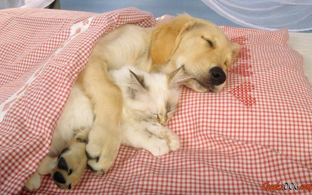 Dormindo agarradinho com meu aumigão.