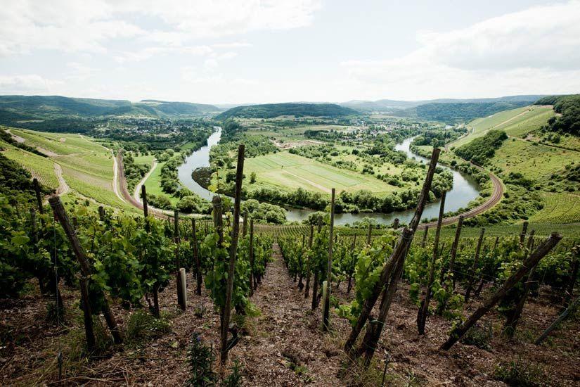 The view from Van Volxem's vineyard