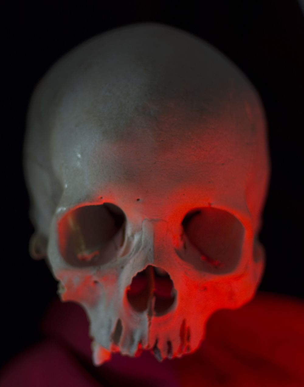 Img 8678 Skull Reference Skull Human Skull
