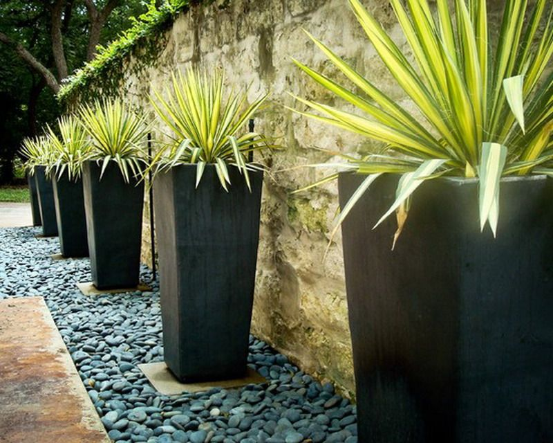 beauteous trees to plant near house. Flooring  Beauteous Contemporary Garden Ideas With Ultra Large