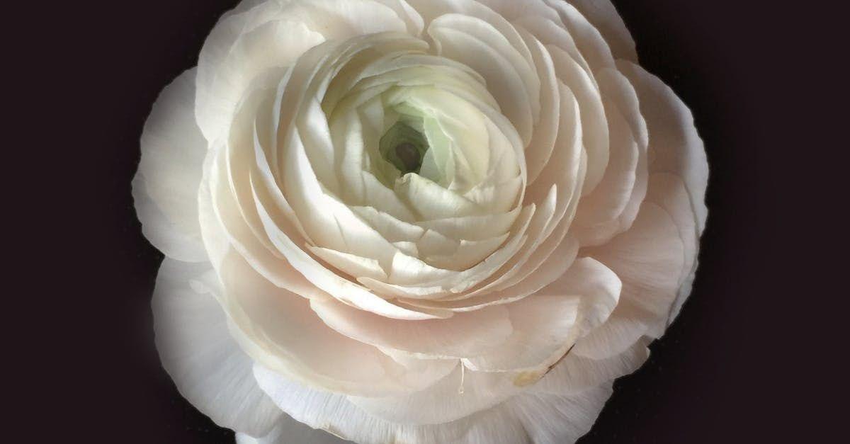 Buket Bunga Background Putih Foto Stok Gratis Tentang Background Hitam Buket Bunga Putih Inilah Buket Bunga Termahal Di Dunia Bunga Buket Bunga Mawar Ungu