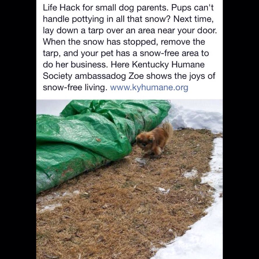 Great Idea For The Winter Rottweilers Dogs I Love Pinterest