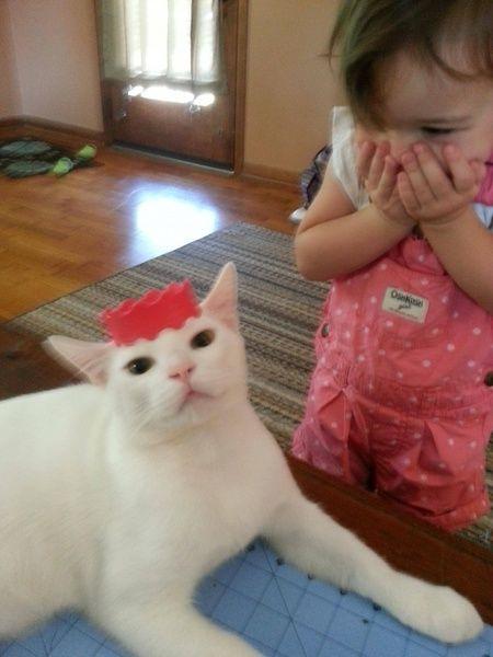 Кошка, которая любит играть с девочкой в принцессу