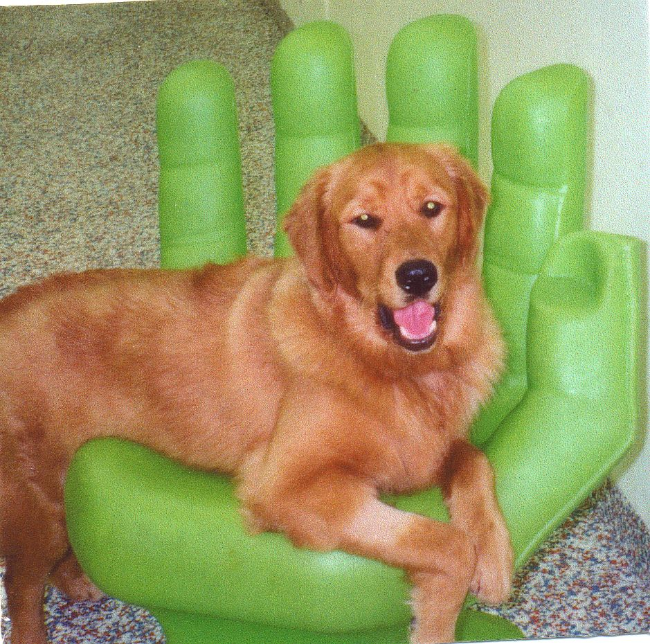 Playground Equipment Green Plastic Hand Chair At All About Dogs
