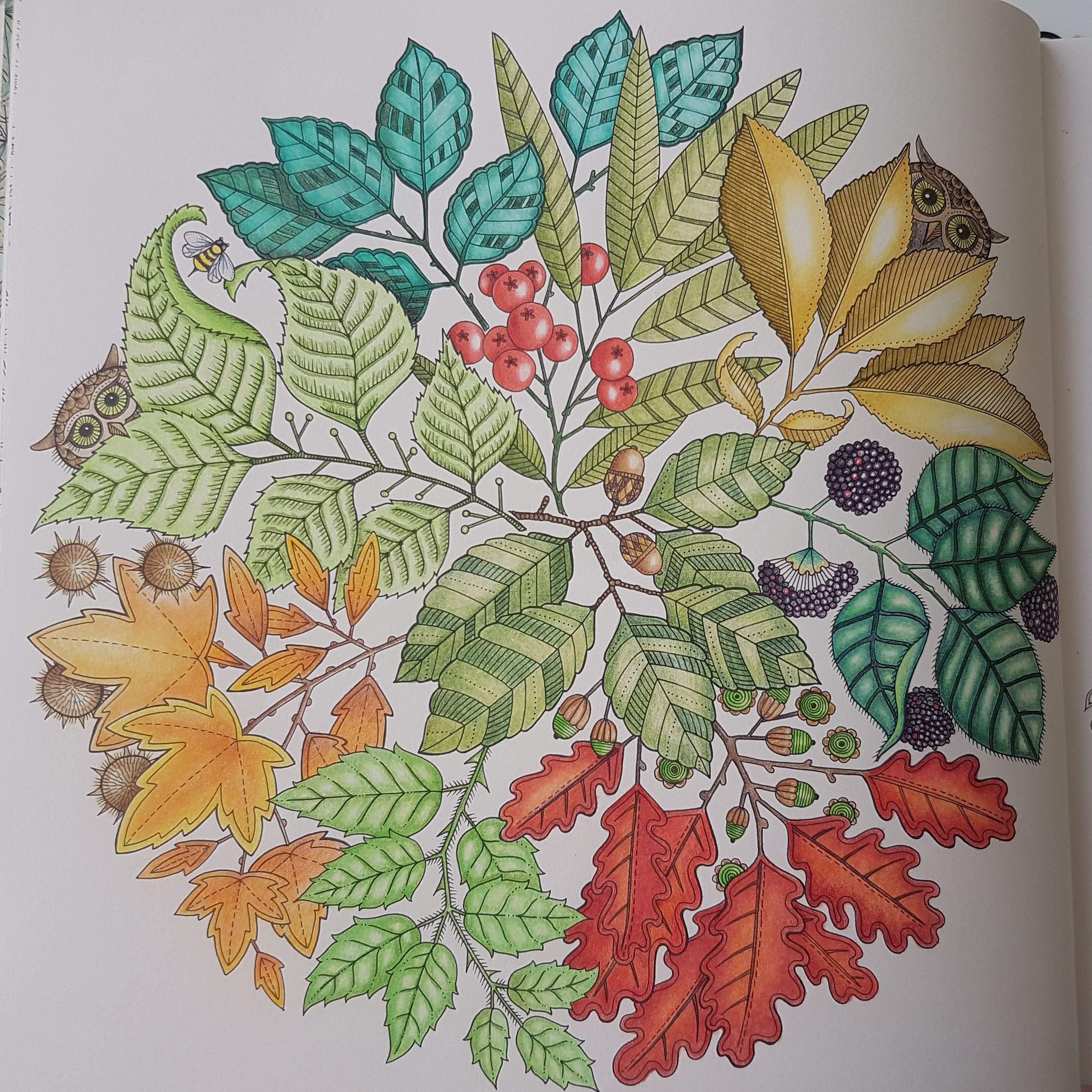 Image is from the Secret garden colouring book. I used Polychromos ...