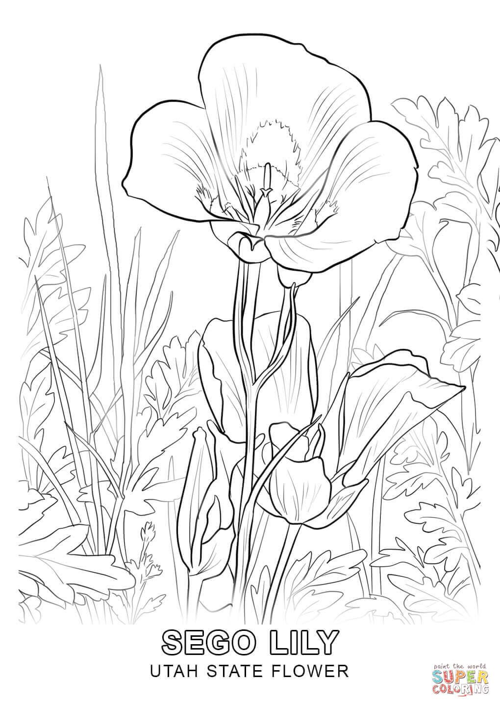Utah State Flower Coloring Page Free Printable Coloring Pages