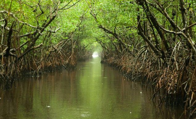Así eran los pantanos del río Higuamo.