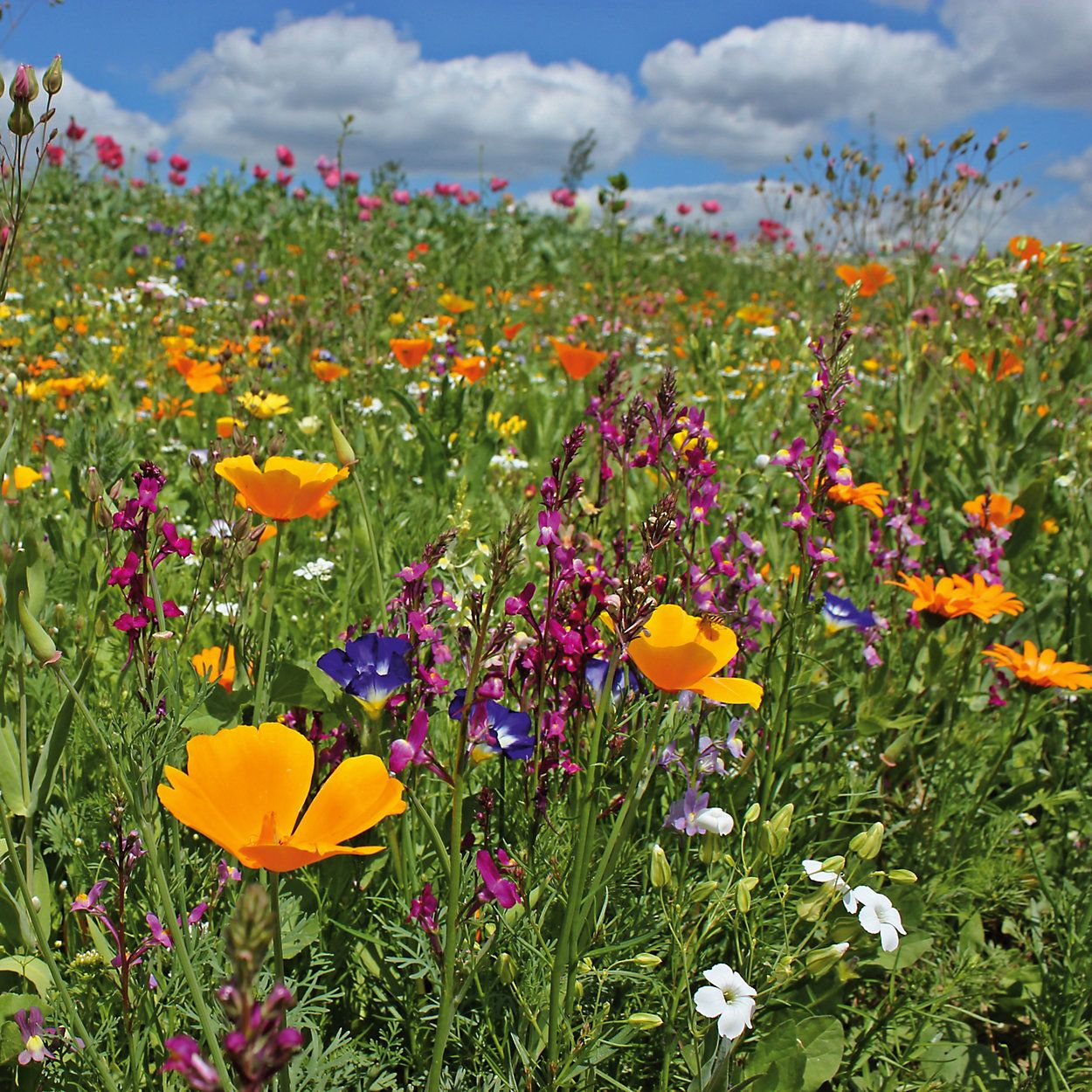 Pflanzen Für Bienen Und Schmetterlinge