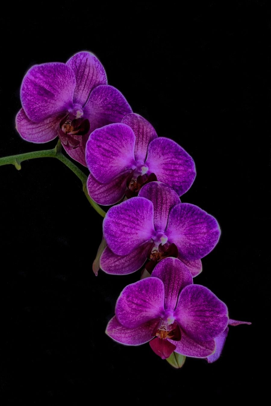 Purple orchid orchid flowers and plants purple orchid biocorpaavc