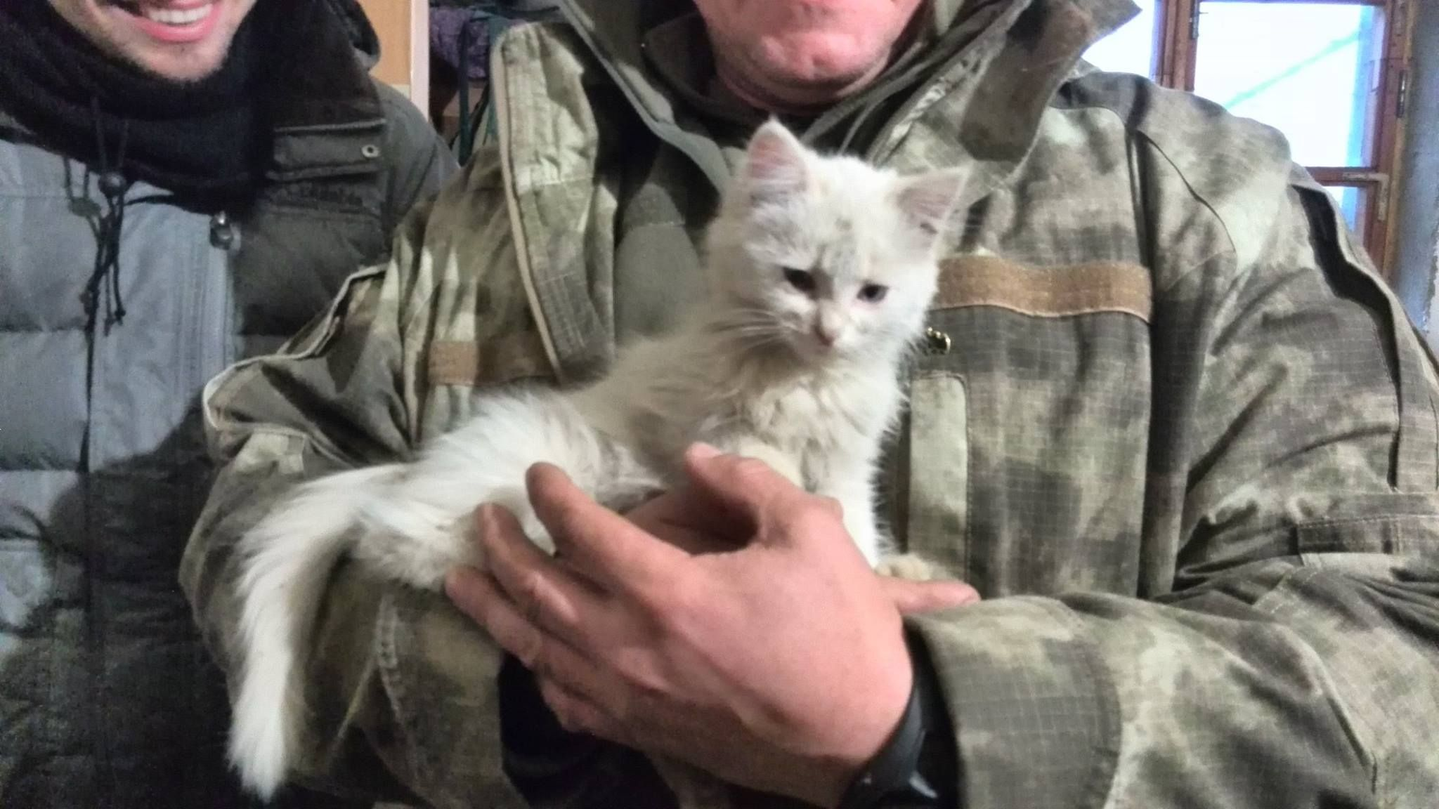20 things you didnt know about military cats cat pics