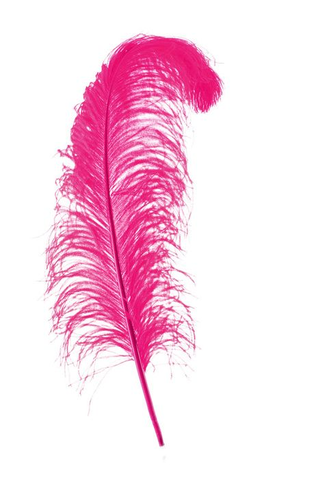 Pink Feather Feather Feather Art