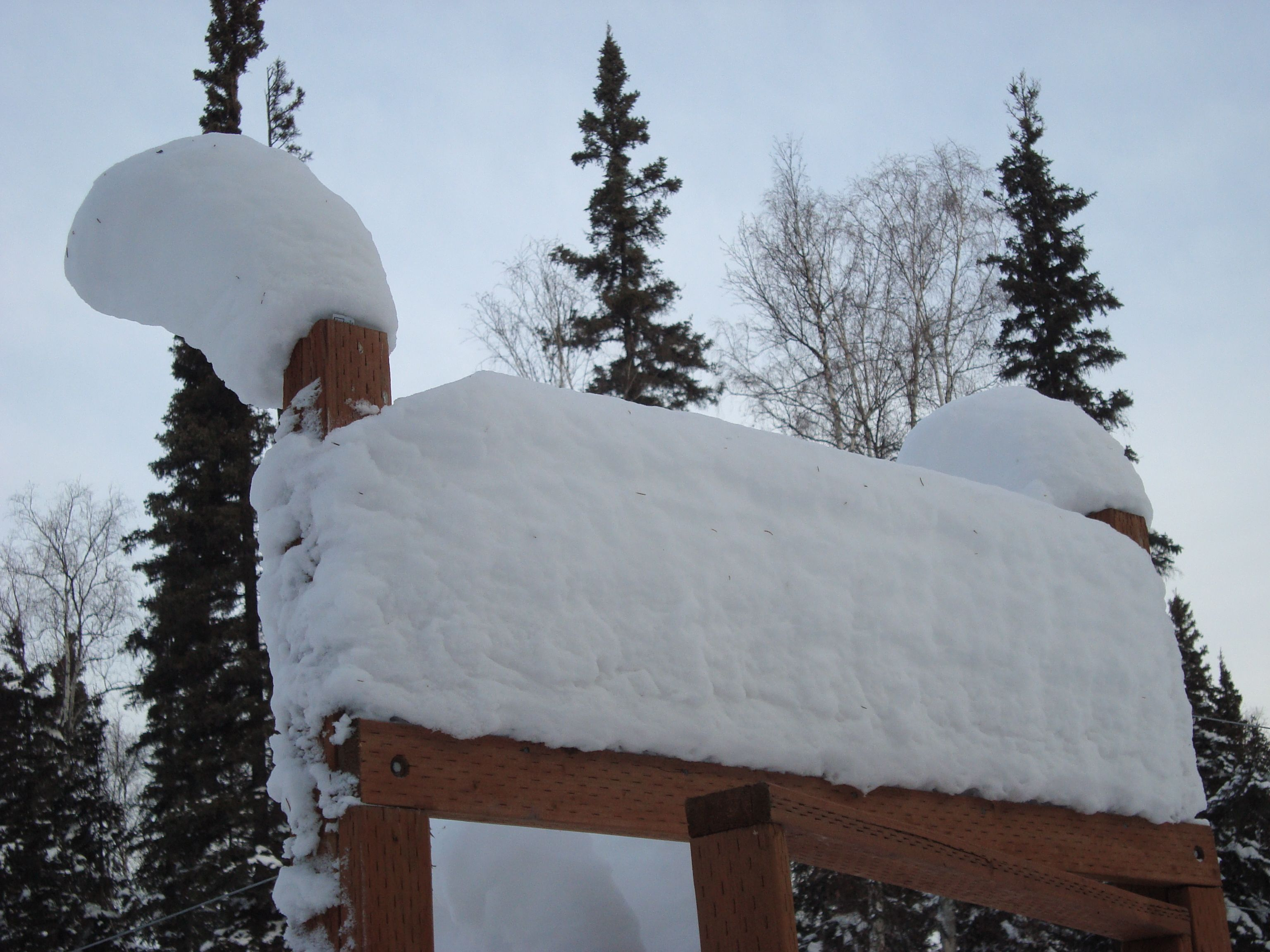 snow build up on our garden fence posts over the course of the