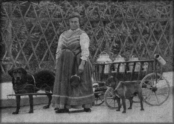 Rottweiler History German Woman With Her Rottweiler And Cart