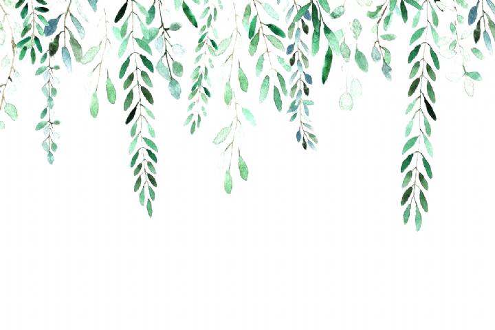 All About Leaves Watercolor By Mariepierlaf On Creativemarket Pc Backgrounds En 2020 Fond D Ecran Cactus Fond D Ecran Ordinateur Fond D Ecran Telephone