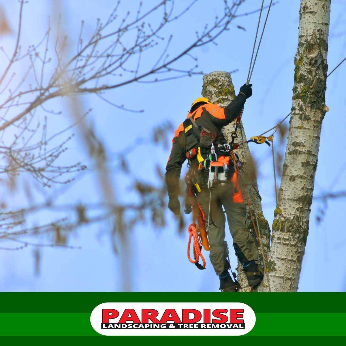 Hire only tree professionals who closely follow the