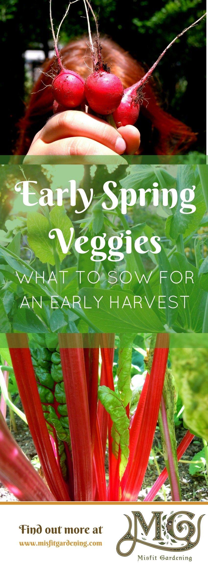 Early Spring Veg You Need To Grow Vegetable Garden 400 x 300
