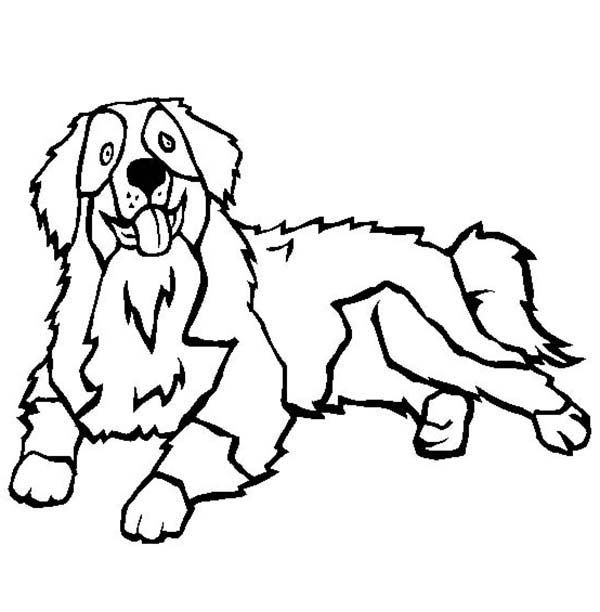 Bernese Mountain Dog Coloring Pages Dog Coloring Page Dog