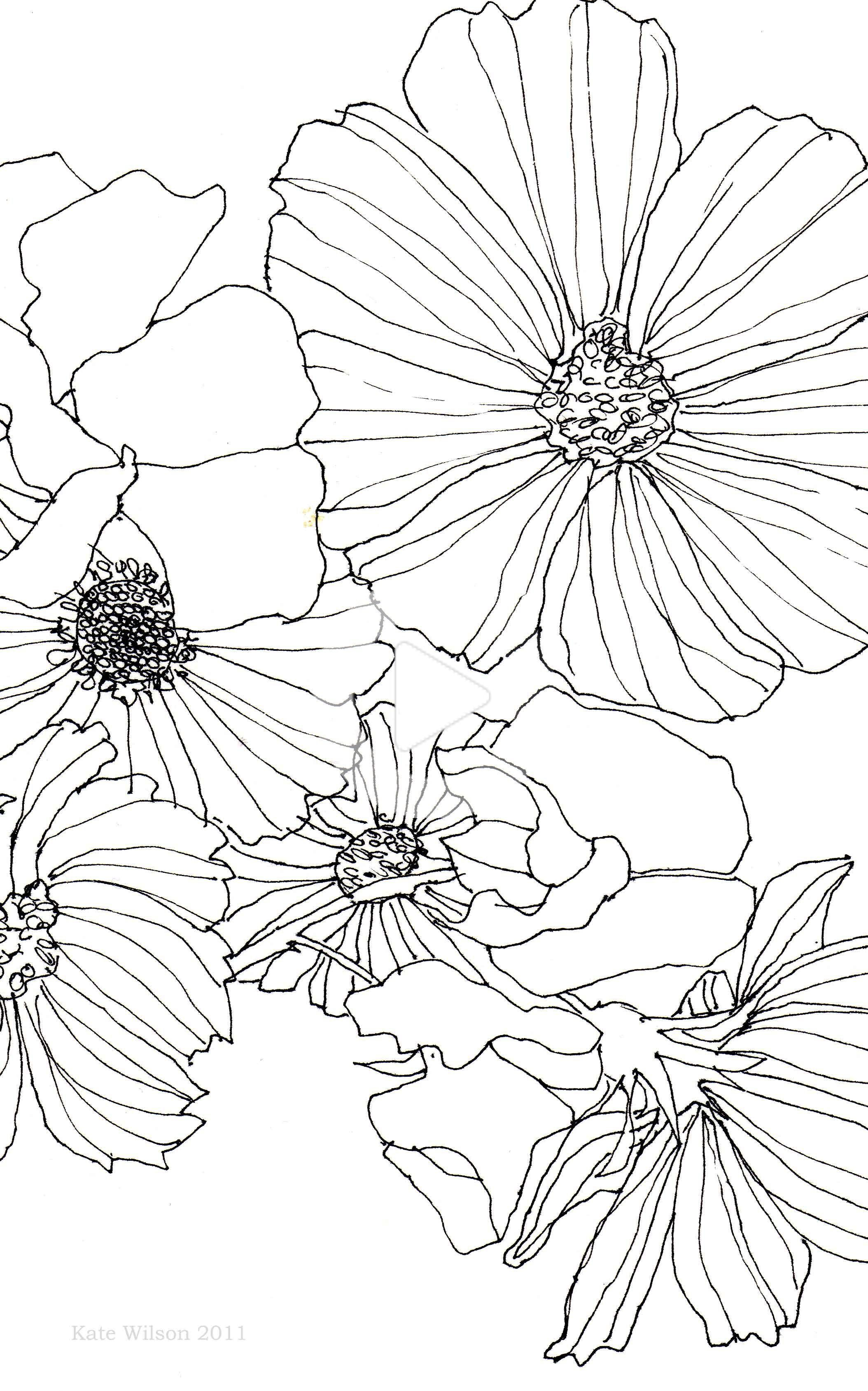 Cosmos And Sweet Pea In 2020 Floral Drawing Flower Drawing Flower Sketches
