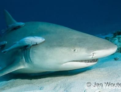 Great news for sharks! Stronger Shark Finning Ban Endorsed by European Parliament