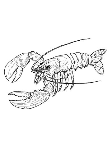 Maine Lobster Coloring Page From Lobsters Category Select 27371 Printable Crafts Of Cartoons Nature Animals Bible And Many More