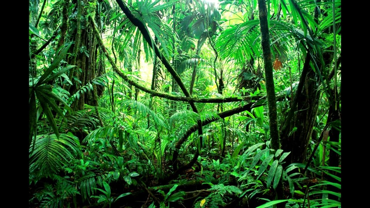 yucatan jungle rain ambience wood Sounds For Relaxation
