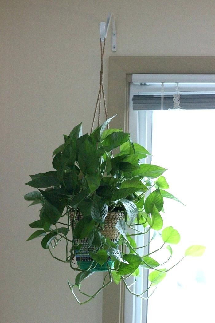 how to hang plants from ceiling homely idea indoor hanging ...