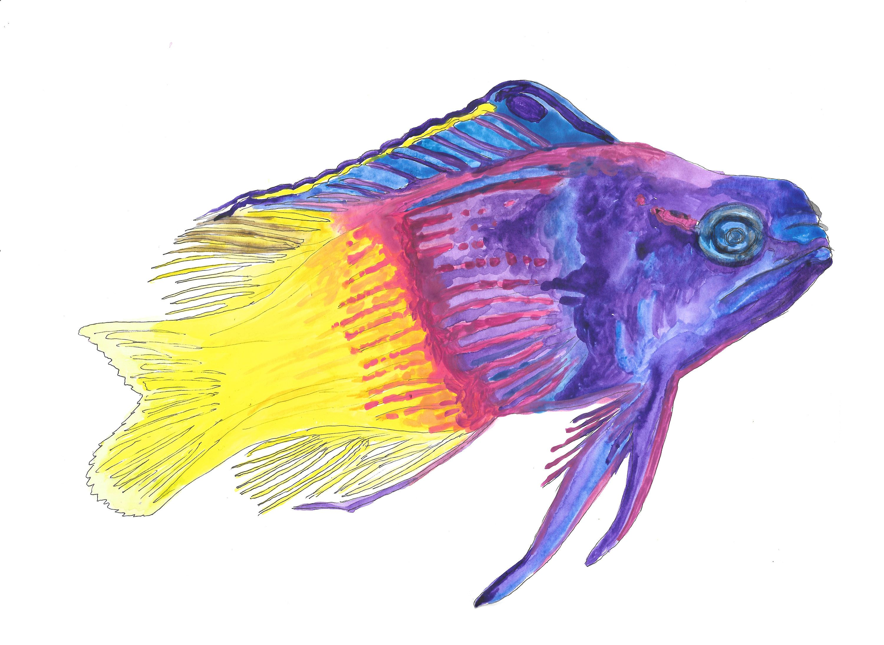 Royal Gramma Fish Hand Drawn Watercolor Illustration By Robertatomei On Etsy How To Draw Hands Watercolor Illustration Watercolor