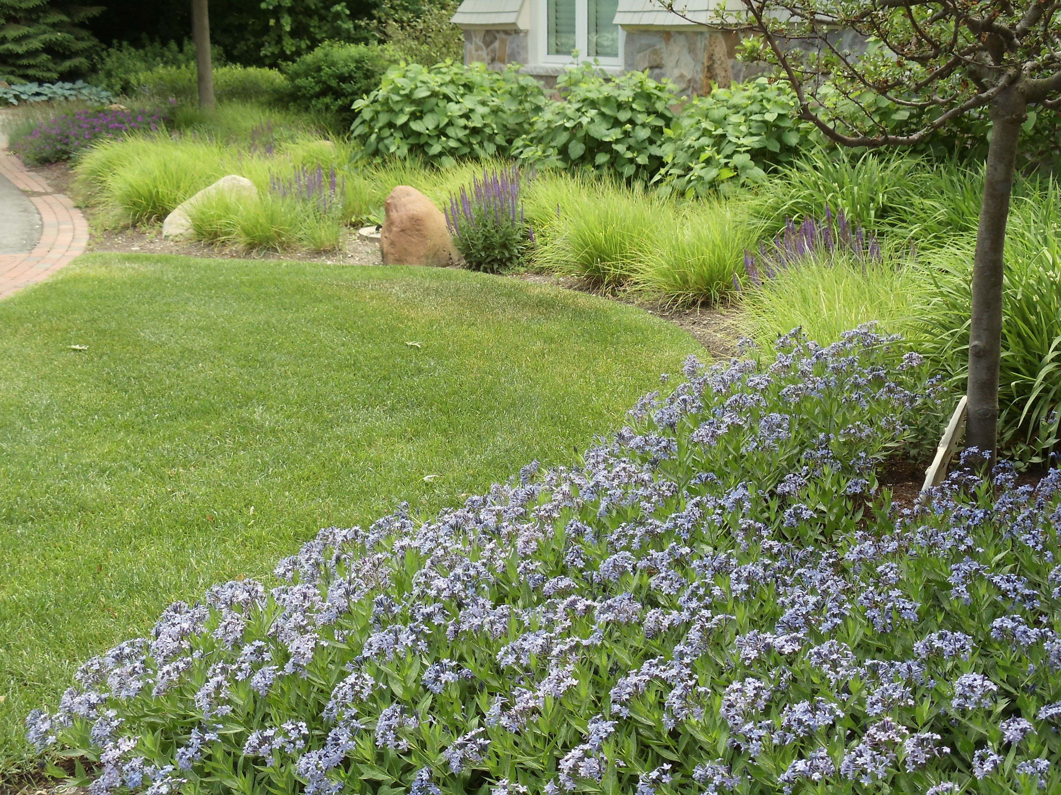 Amsonia Orientalis Blue Ice In The Foreground Photo By Roy Diblik