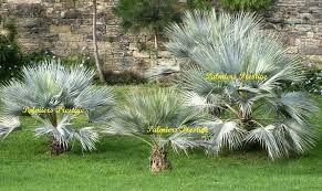Resultat De Recherche D Images Pour Piscines Avec Palmiers