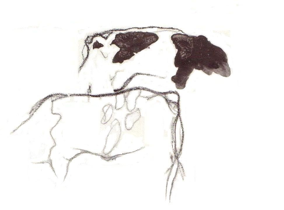 cows, a drawing from my sketchbook, art by Co van Assema