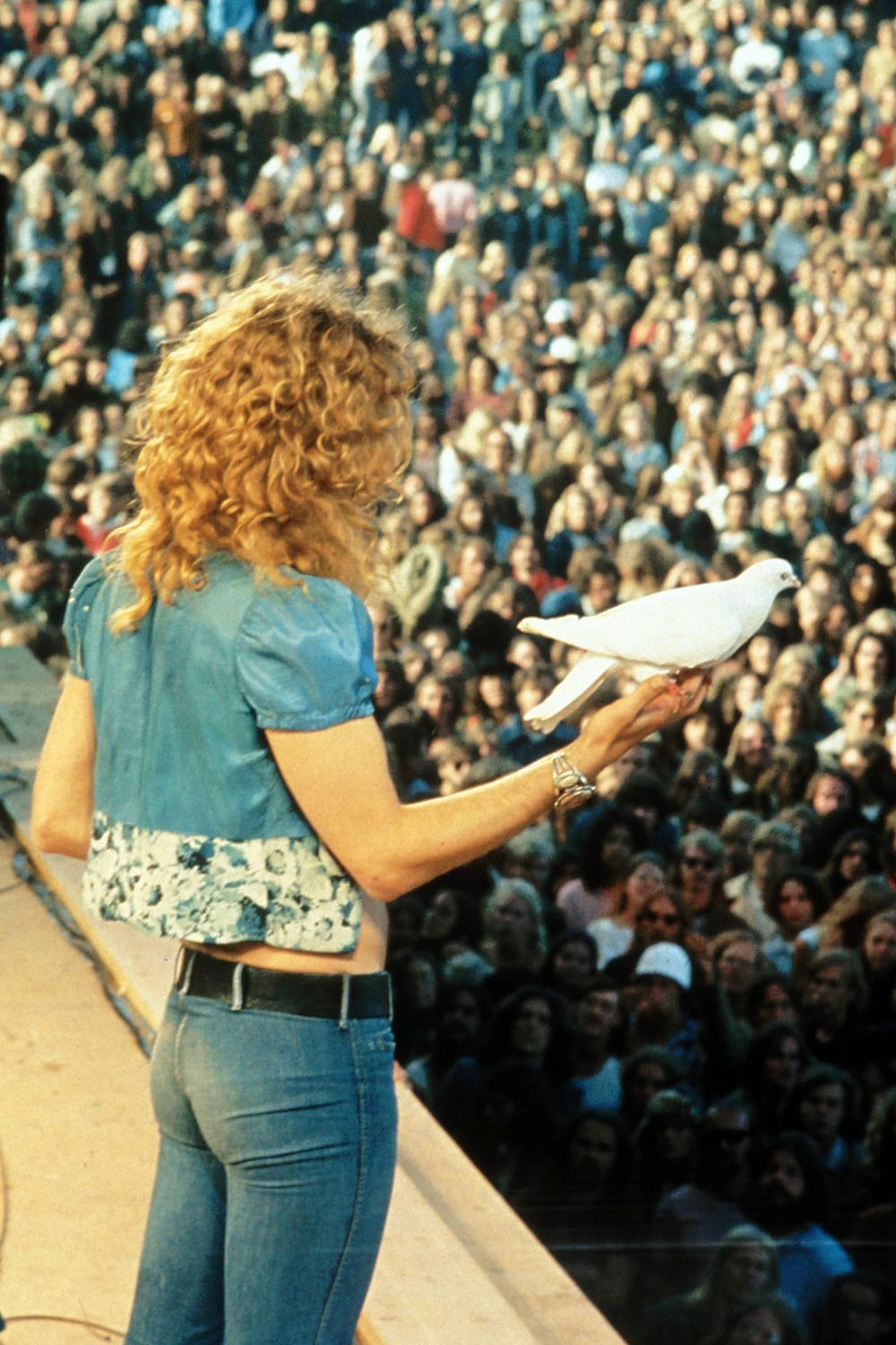 robert with the dove led zeppelin pinterest led zeppelin and