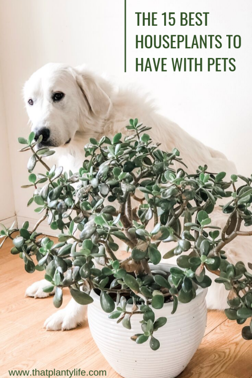 15 NonToxic Houseplants great for Pet Parents