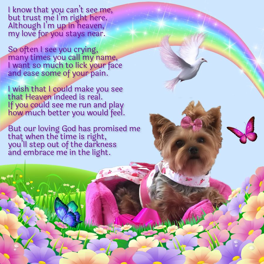 I know that you can't see me... (Yorkie) | Saying Goodbye ...