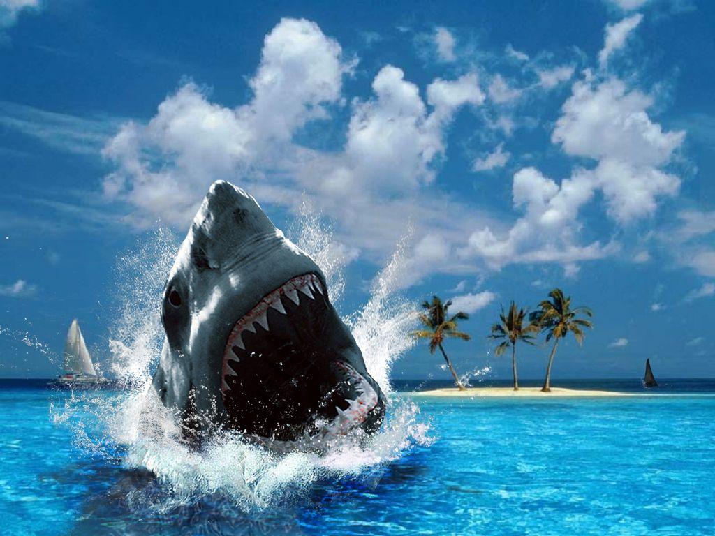 Shark Shark Pictures Fish Wallpaper Hd Wallpaper