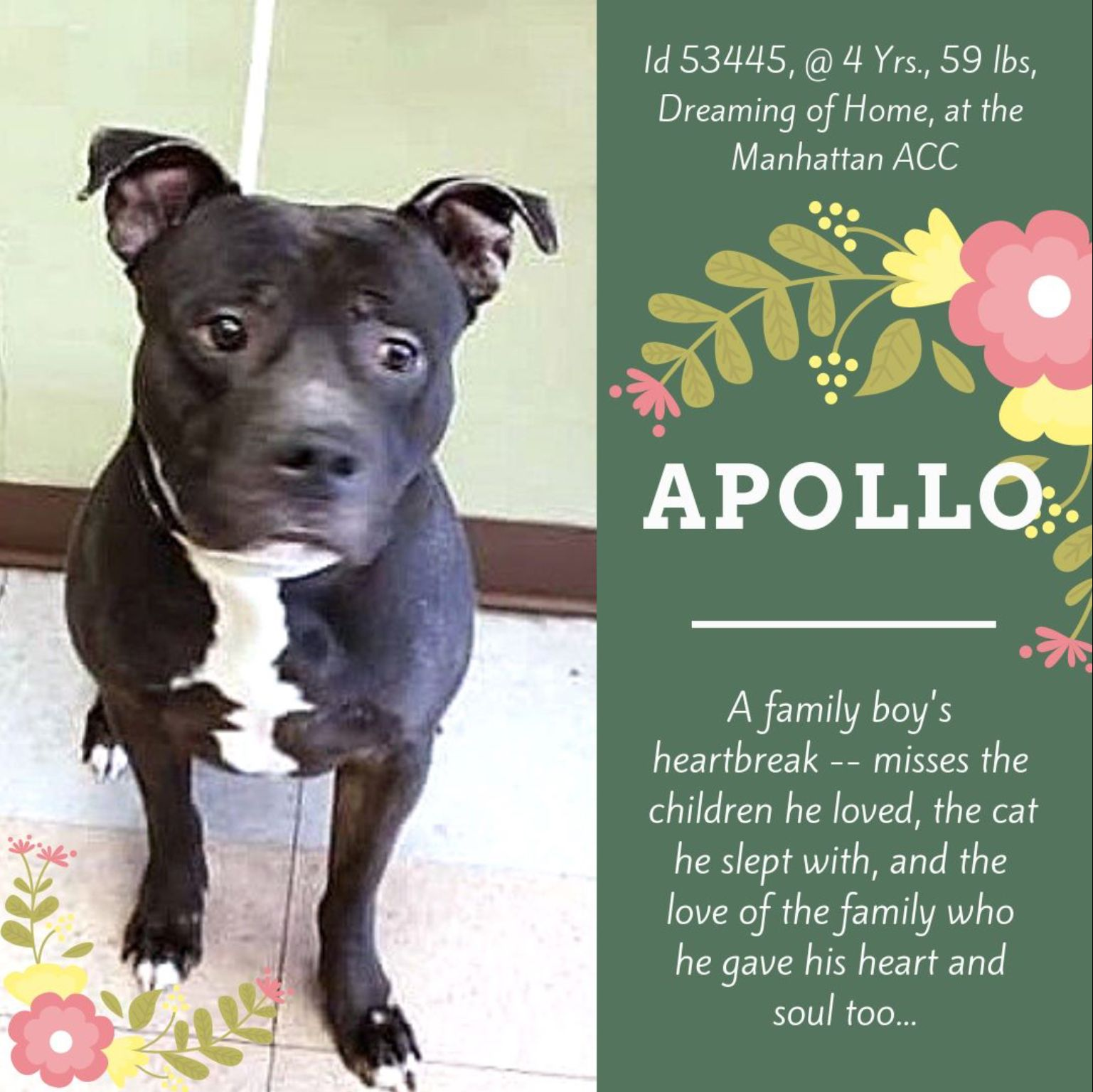 APOLLO TO DIE 02/02/19 Animal projects, Adoption