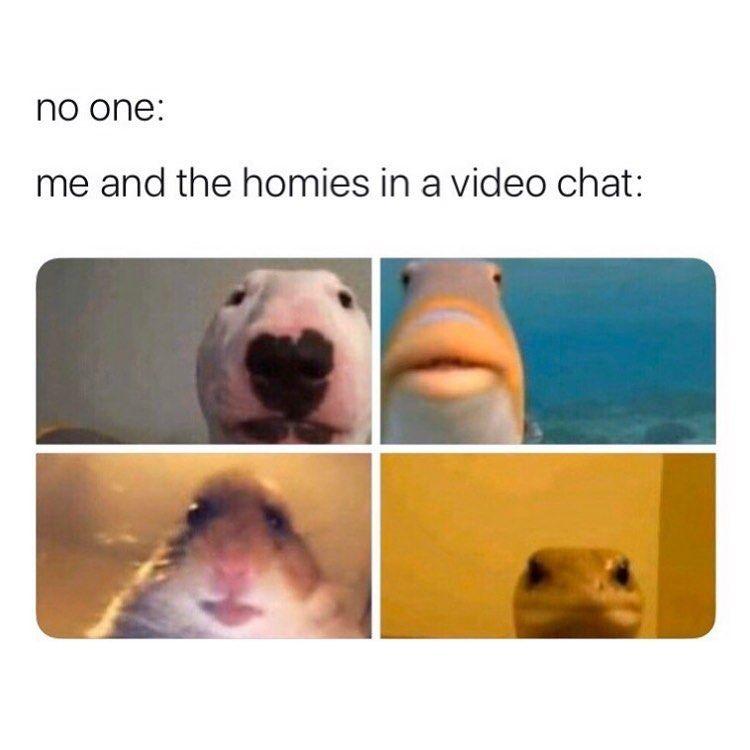 Meme S Quotes Memes Its Memes Laughing Memes Memes Quotes Funnie Memes I Meme Truthful Memes Happy Me Dark Humour Memes Stupid Funny Memes Stupid Memes