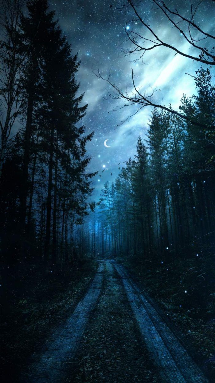 Magical Forest Night Starry Sky - IPhone Wallpapers