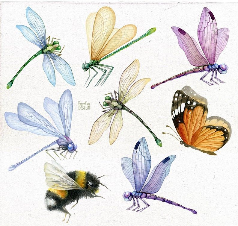 Dragonfly Individual Png Bumble Bee Butterfly Summer Clipart Insect Png Hand Painted Clip Art Summer Clipart Bumble Bee Illustration Bee