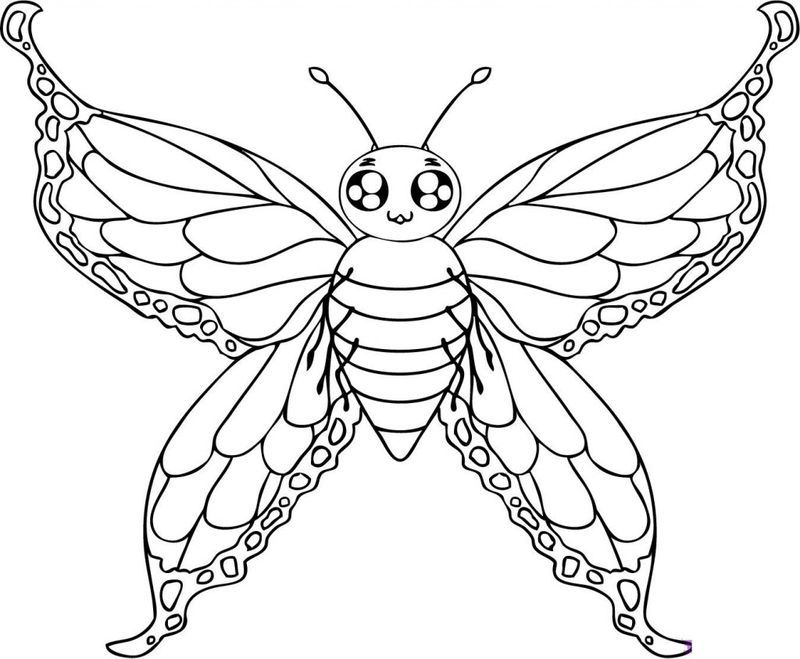 Cool Butterfly Coloring Pages Ideas For Girls And Boys Butterfly