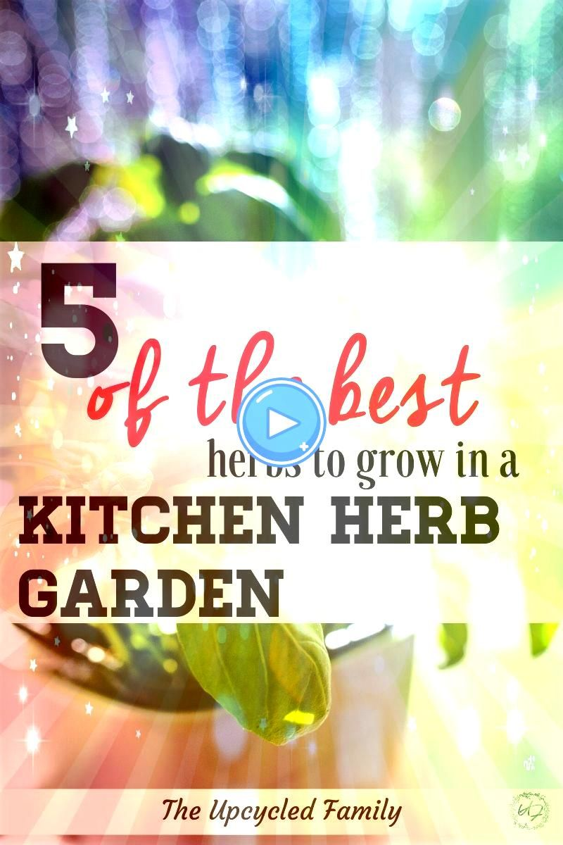 you could have more fresh herbs yearround Wishing you could have more fresh herbs yearround 5 of the easiest herbs to grow in your kitchen herb garden How to make sure yo...