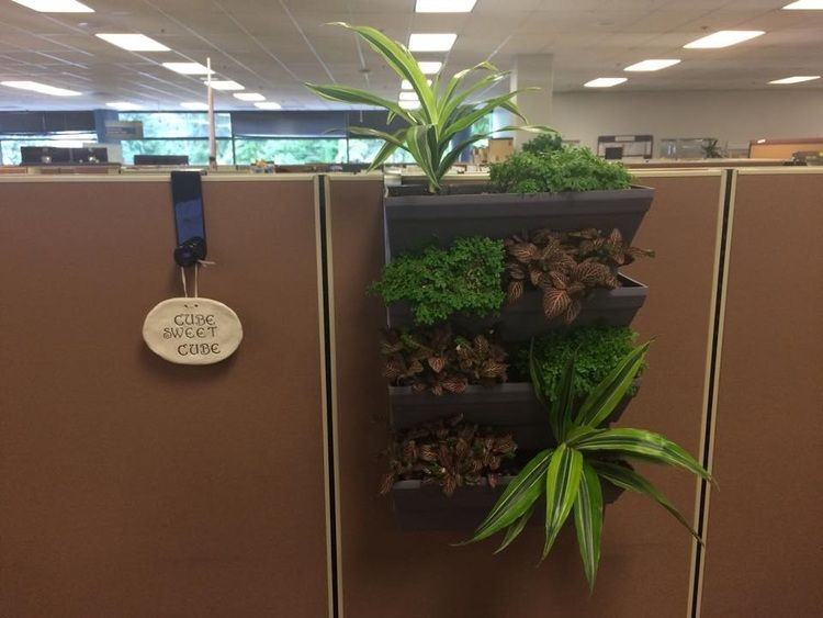 Cube kit indoor cubical vertical garden living wall planter kit cubicle walls cubicle and - Cubicle planters ...