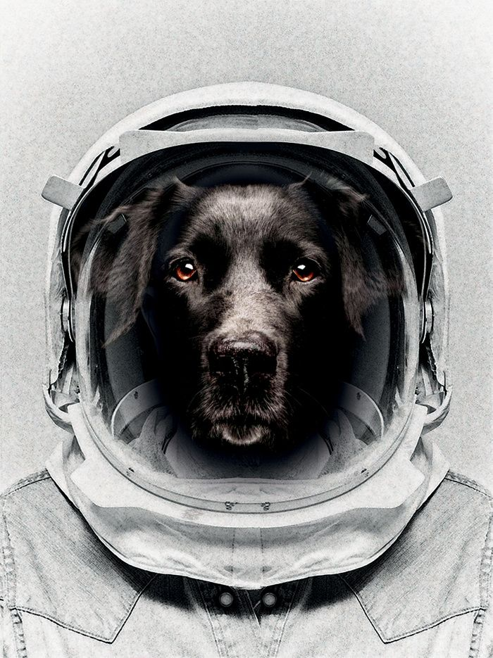 Image result for dog in space suit