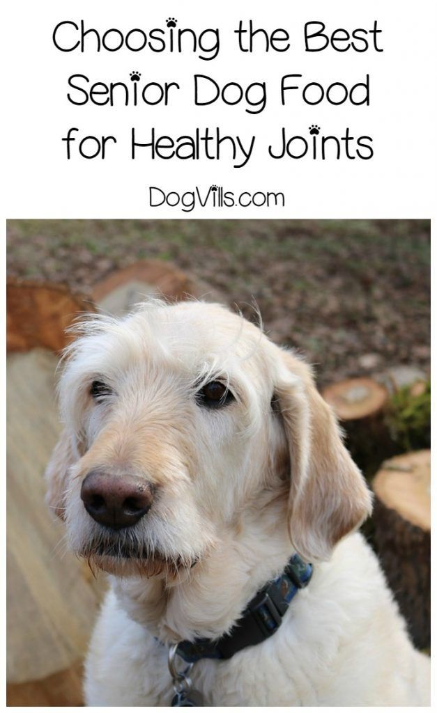 Feeding your older pooch the right food can go a long way to keeping him comfortable and active. Check out our tips for choosing the best senior dog food for healthy joints!