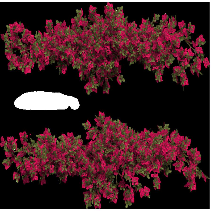cutout plant ivy bougainvillea   Cutout   Trees to plant