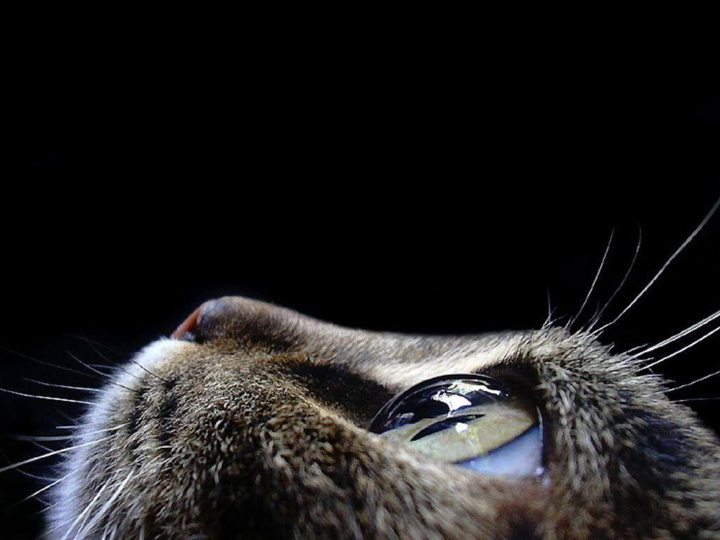 Photobucket Naked Amazing jessica williams uploaded this image to 'cute animals'. see the