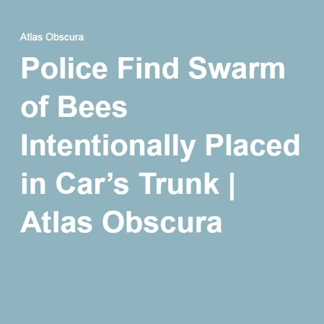 Police Find Swarm of Bees Intentionally Placed in Car's Trunk | Atlas Obscura