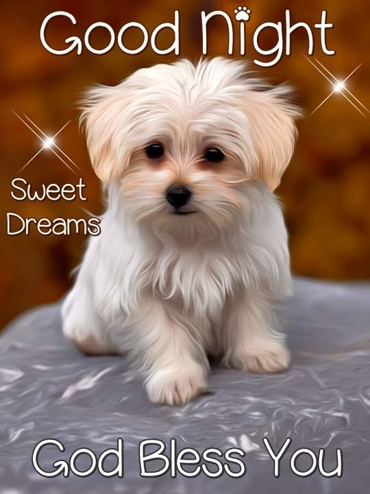 Good Night Sweet Dreams God Bless You Goodnight Dog Cute My